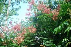 mimosaplant.JPG