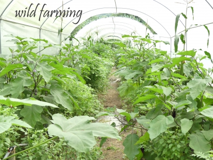 wild farming, sustainable agriculture, organic farming,