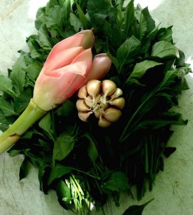 wildcrafted food,solanum nigrum,daun meranti