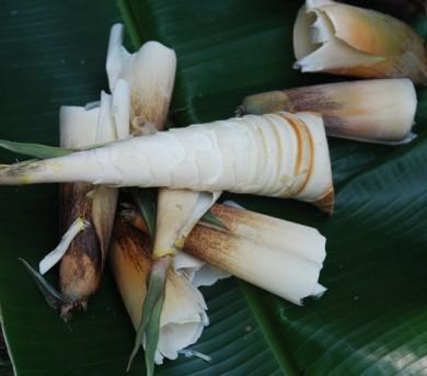rebung masak lemak,bamboo shoots,slow food