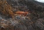 composting carcasses.JPG