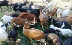 herd web 2.JPG