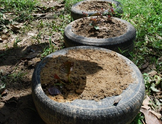 effects of vermicast and chicken dung Table 18 effect of vermicompost and npk on plant growth and yield  this  plant contained 218% k, whereas poultry manure only contained.