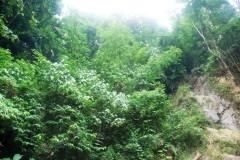 lush green web.JPG