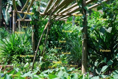 permaculture,layered garden,layered forest,new model for agriculture