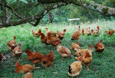 Blog : DQ Farm (est  1991)
