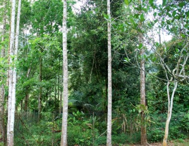permaculture, layered garden, layered forest, new model for agriculture,