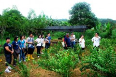 food forest1Web.JPG