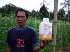 Dengan bangganya my veg have no insect damage Web.JPG