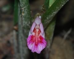 kunci close up flower 2 Web.JPG