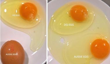 organic eggs, organic eggs in malaysia,