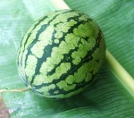 watermelon first 3 kg Web.JPG
