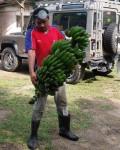 banana1Aweb.JPG