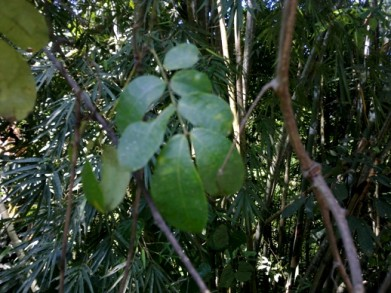 unusual plants, rainforest, rare plants,