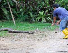 python1 web.JPG