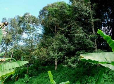 durians,organic durian,sustainable durian farm,organic durian farm