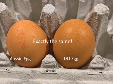 organic eggs, grassfed eggs, pastured eggs,